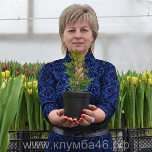 Рассада цветов в Курске Клумба46